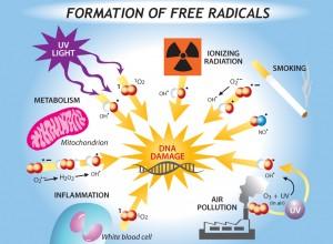 radicals-300x220