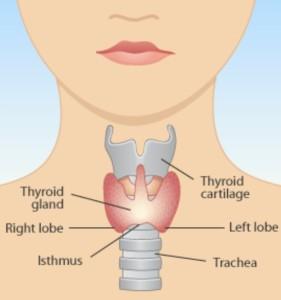 tiroida 1