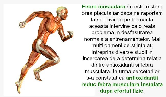 febra-musculara-1