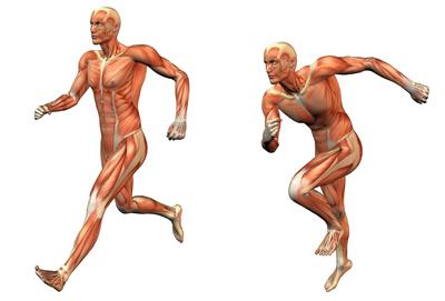 febra-musculare